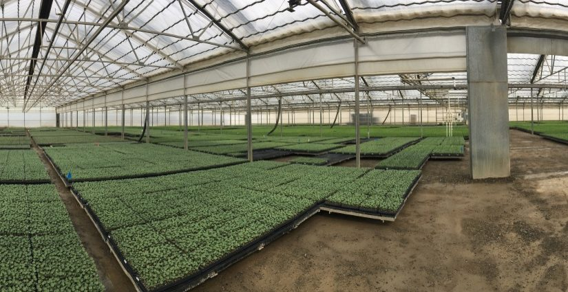 Nursery & Greenhouse Management