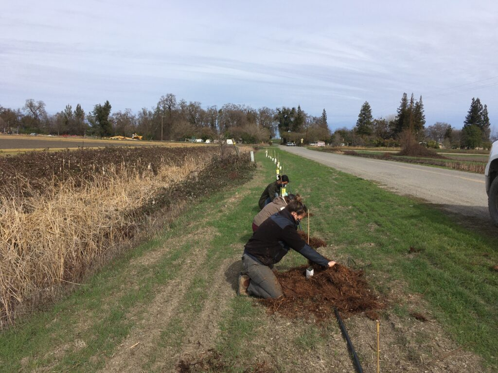 Volunteers work on finishing up the mulching portion of the day.