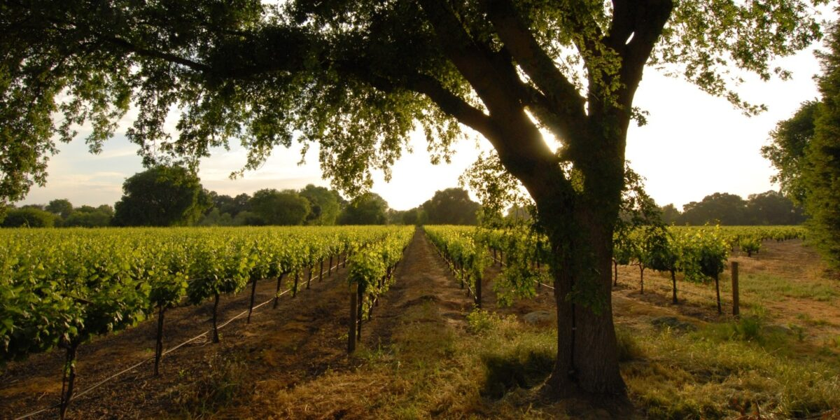 Fifth-Generation Winemaking in Acampo
