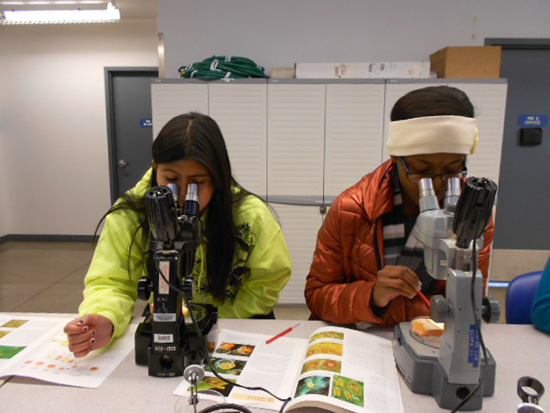 two students looking in microsopes