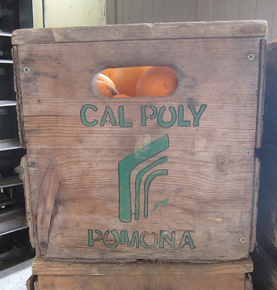 wooden crate of oranges Cal Poly Pomona