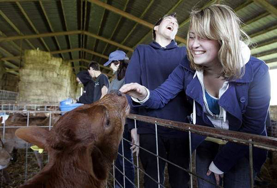 an image of a female student smiling while she pets a baby cow