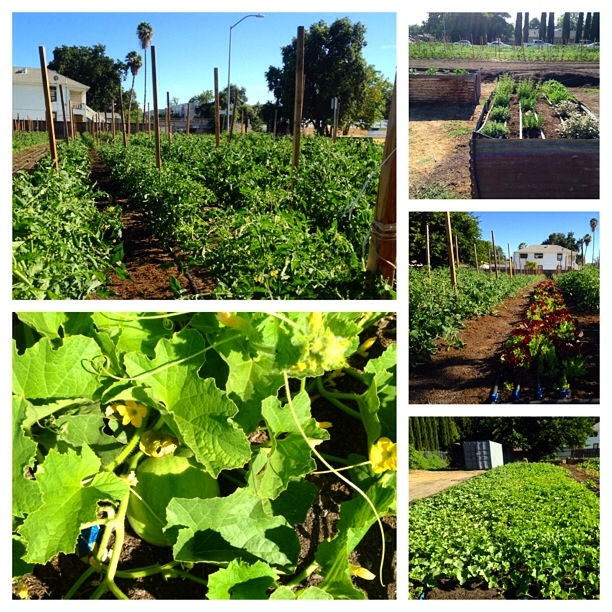 West Sacramento's first urban farm