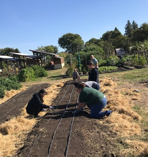 Urban Agriculture in Stockton, California