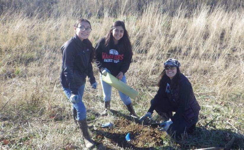 Planting and salmon spotting along Putah Creek