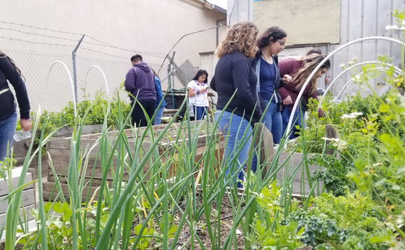 Food Waste and Urban Gardens