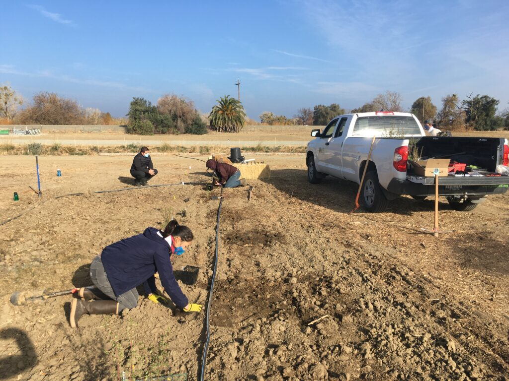 Volunteers get to work planting along the irrigation line.