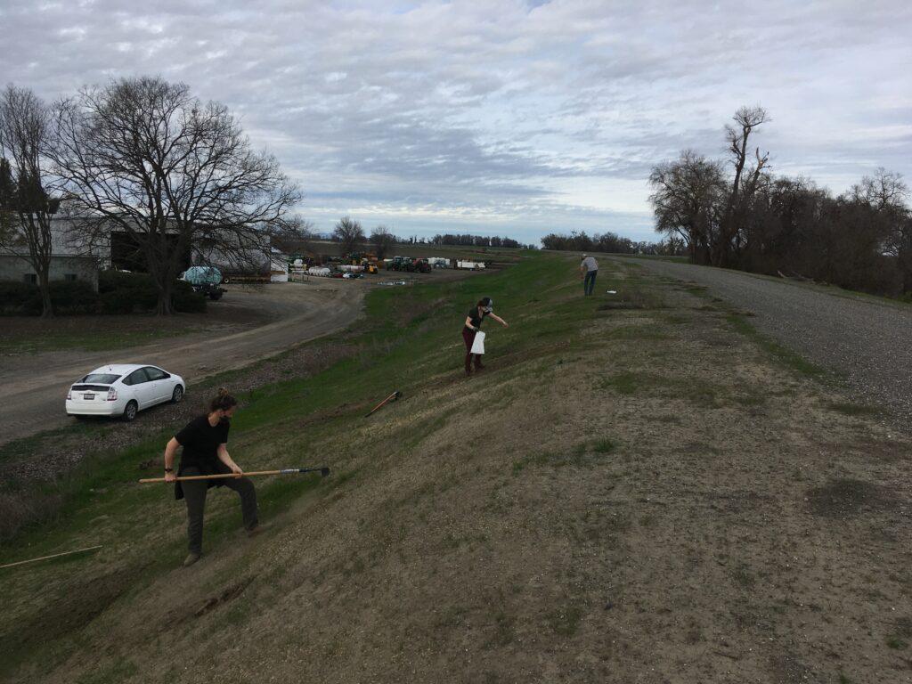 Volunteers sprinkle wildflower seeds on the levee.