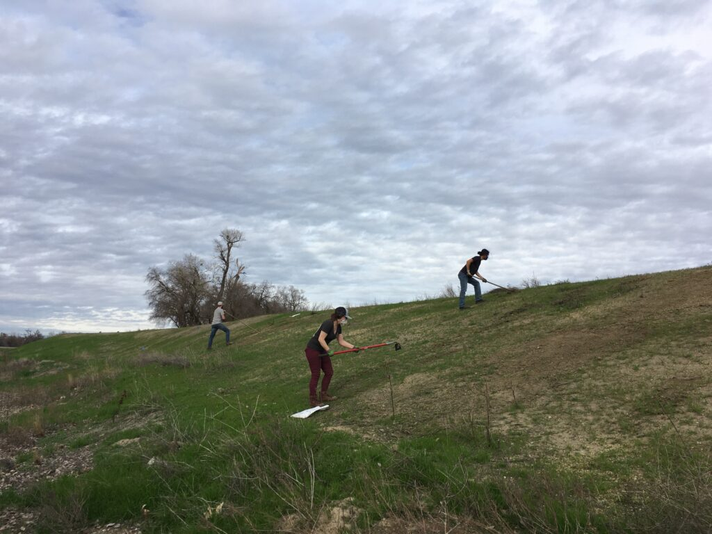 SLEWS volunteers use hoes to clear patches of earth for wildflower seeds.